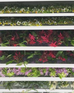 Herb-Drying-Chamomile-Monarda Touring the Herb Garden Frederick MD Herbalism Education CSA Plant Medicine Wild Edible