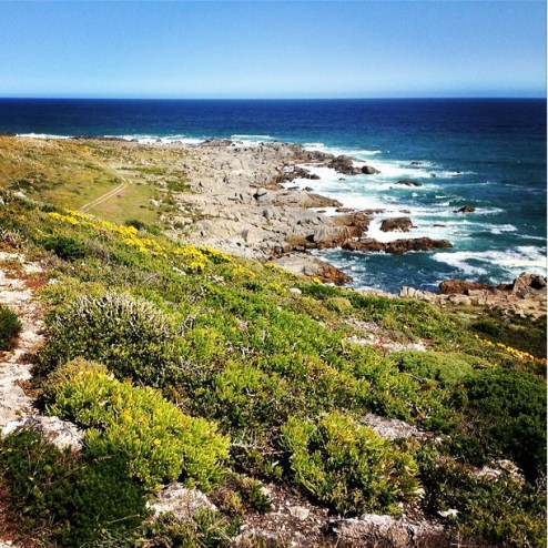 West Coast flower Route South Africa