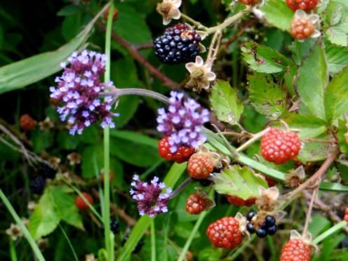 Berry farm swellendam