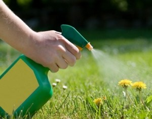 Weed Control Services