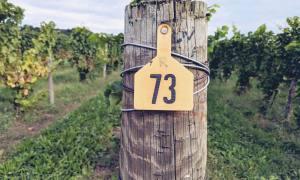 Vineyard post at Fox Run