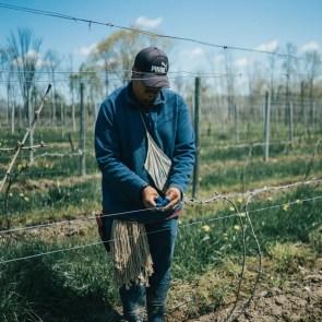 Salvadore working the vineyard at Fox Run