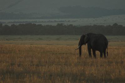 Sundown, Masai Mara, Kenya