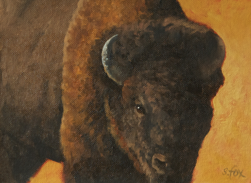 American Bison  oil on canvasboard 6x8