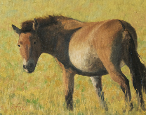 Takhi Mare, Hustai National Park, Mongolia 8x10 oil on canvasboard
