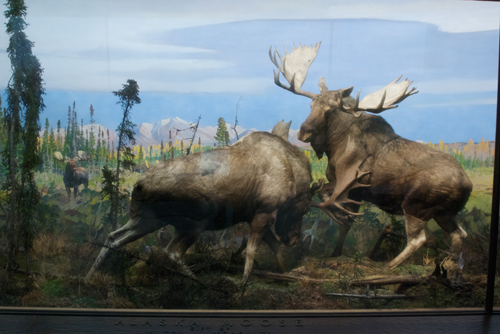 Moose, background by Carl Rungius