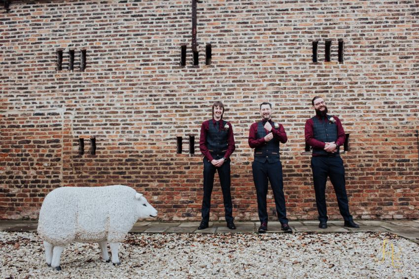 Groom and groomsmen in burgundy red shirts with model sheep