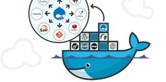 How to create environment for multiple Drupal containers using Nginx
