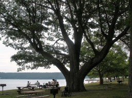 7-16-2017 Lake Worship Tree