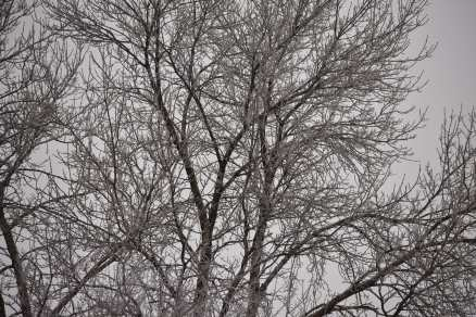 Frozen Branches (© F. P. Dorchak, Feb 2, 2017)