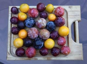 Stonefruit image