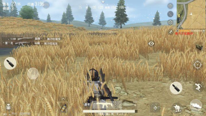 麦畑 匍匐