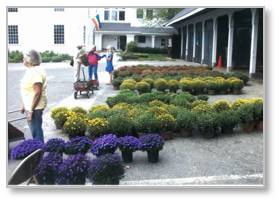 chrysanthemum sale, First Parish of Sudbury