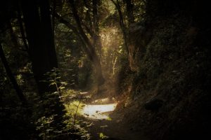 God of Dirt: A Meditation on Intimacy with Nature — Lane Williamson