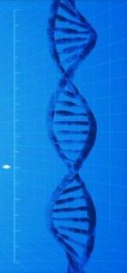 Fluoroquinolones can damage dna leading to mitochondrial disorder