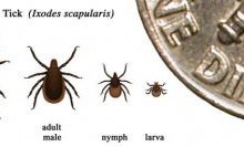 Treating Lyme with Ciprofloxacin could be a Disaster