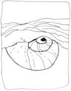 Sensual shell:coquillage sensuel