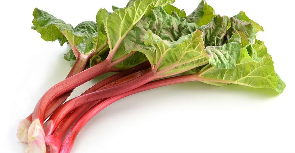 Ne mangez pas les feuilles de rhubarbe ! © photogal, Shutterstock