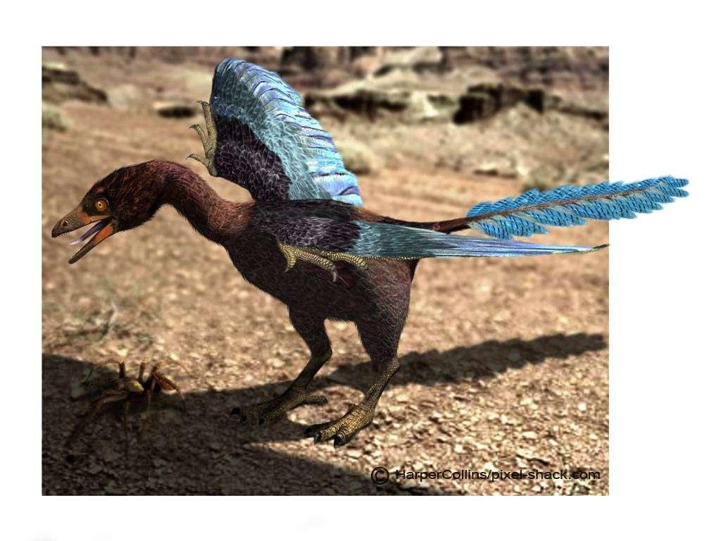 Les dinosaures avaient des plumes !
