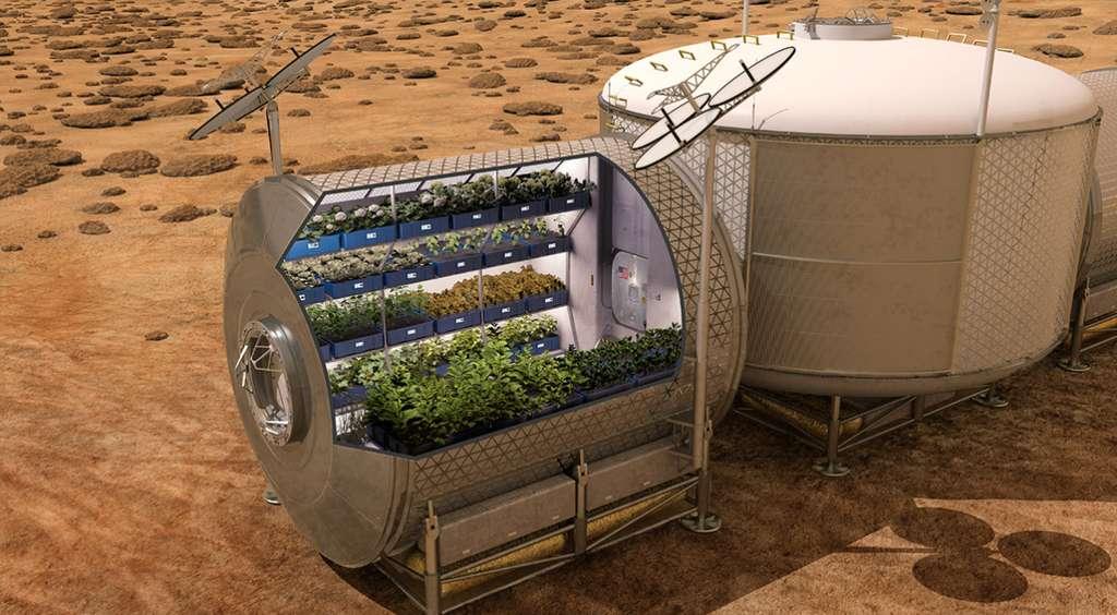 La Nasa envisage très sérieusement de cultiver sur Mars, des produits frais made in Earth. © Nasa