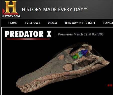 Le crâne de Predator X, montré sur une vidéo de la chaîne History.Com (cliquer sur l'image pour y accéder).
