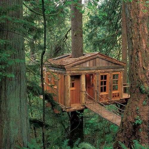 un cabane dans les arbres