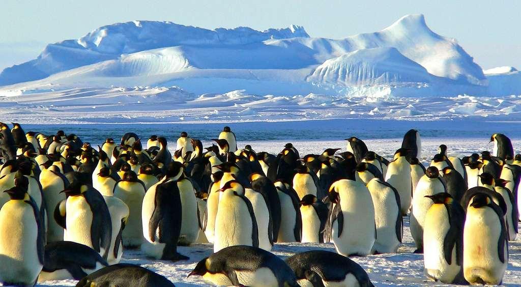 Le manchot empereur est l'un des symboles de l'Antarctique. © MemoryCatcher, Pixabay, CC0 Public Domain