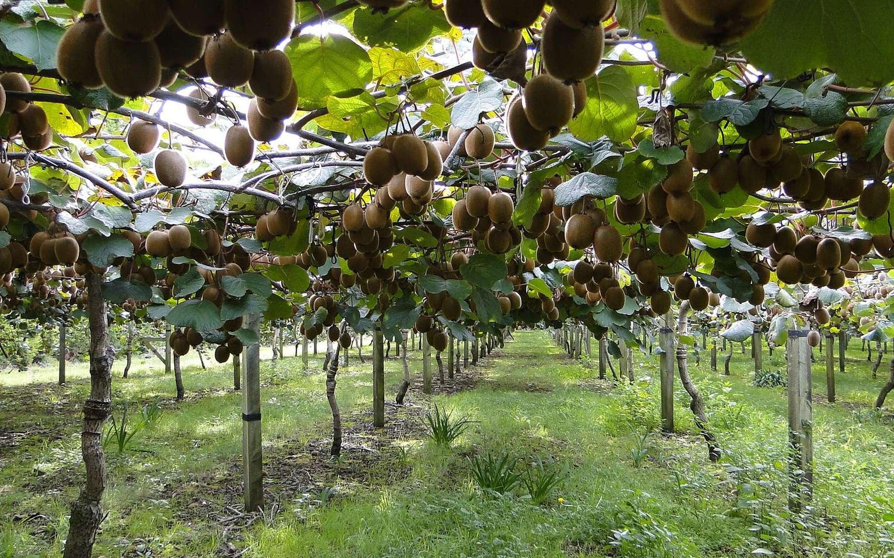 Comment Bien Planter Un Arbre Fruitier Dossier