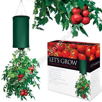 Plant de tomates suspendus