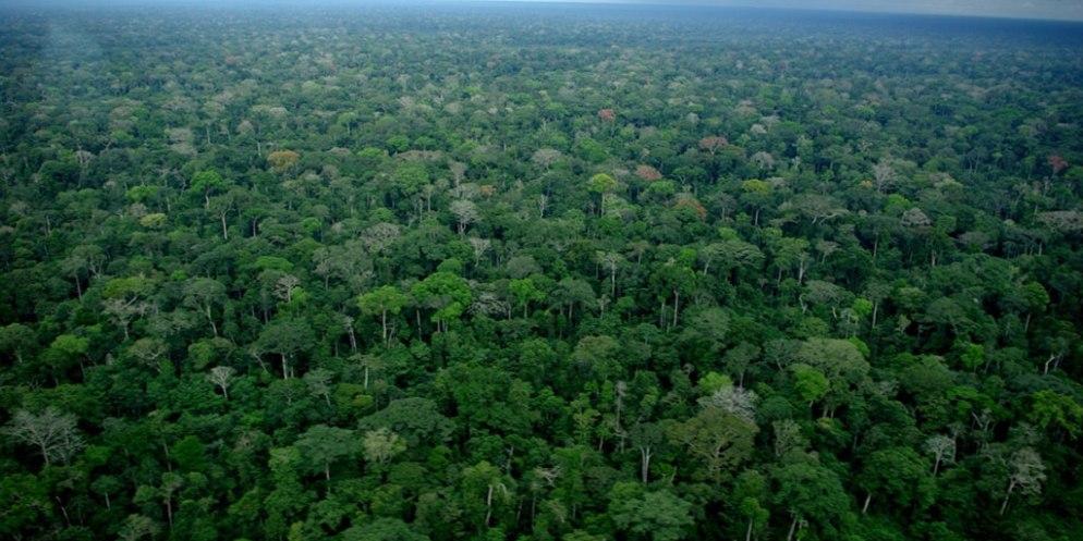 """Résultat de recherche d'images pour """"importance forêt congo"""""""""""