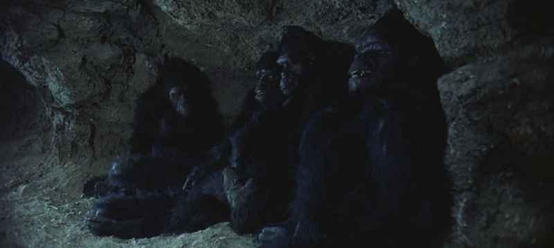 8 2001 Monkeys Hiding At Night