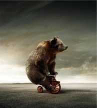 bear-on-bicycle-1