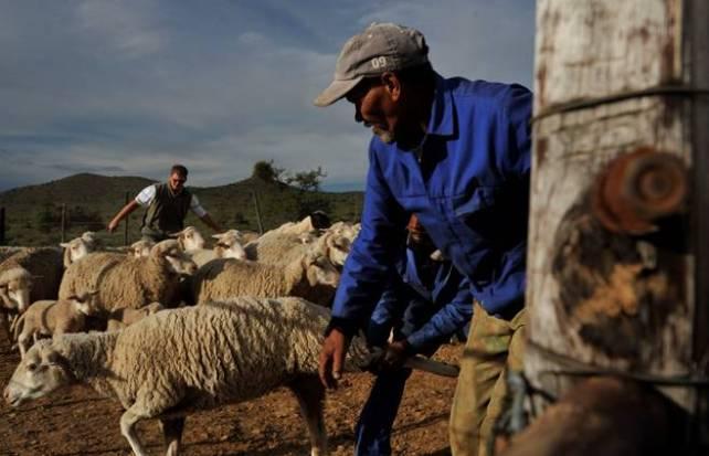 sheep farmer karoo