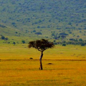 savannah territory - Index A-Z