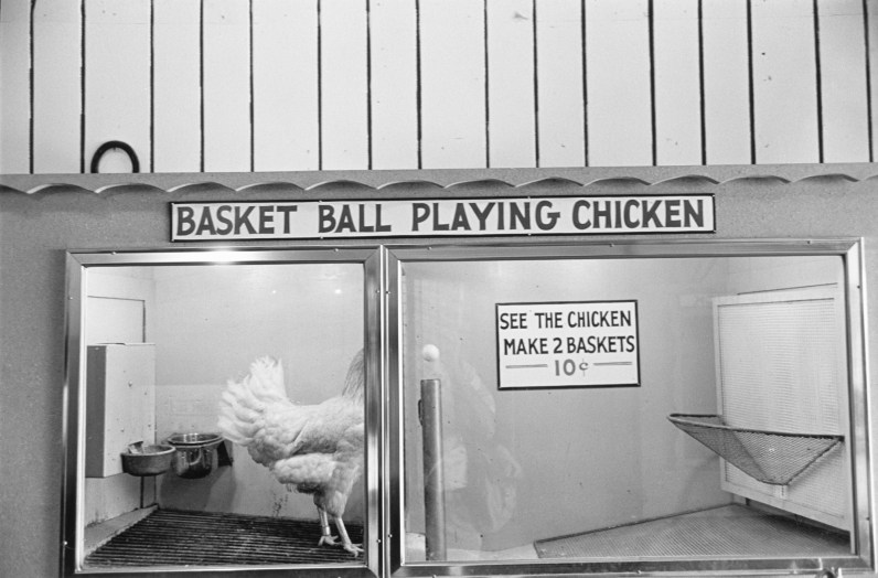 Black-and-white photograph of a basket ball playing chicken attraction