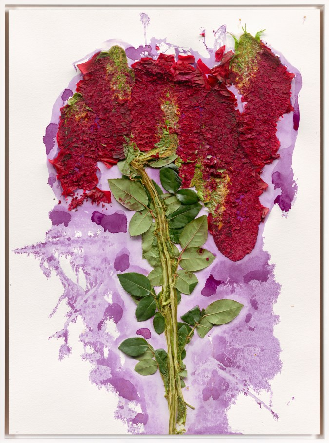 Color print of a red flower made of splattered paint and real stems of green leaves on a purple paint splash on a white background
