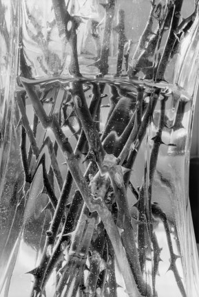 Black-and-white photograph of a detail of stems in a vase with water