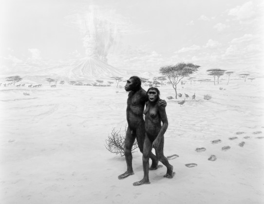 Earliest Human Relatives, 1994, gelatin-silver print