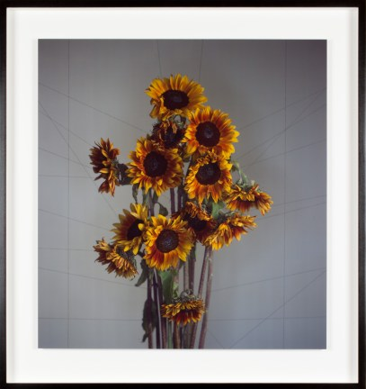 Color photograph of a bunch of yellow flowers in front of a gray background with faint criss-corssing lines