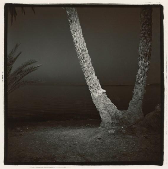 Untitled (Palm #7, Baja), 1977, split-toned selenium gelatin-silver print