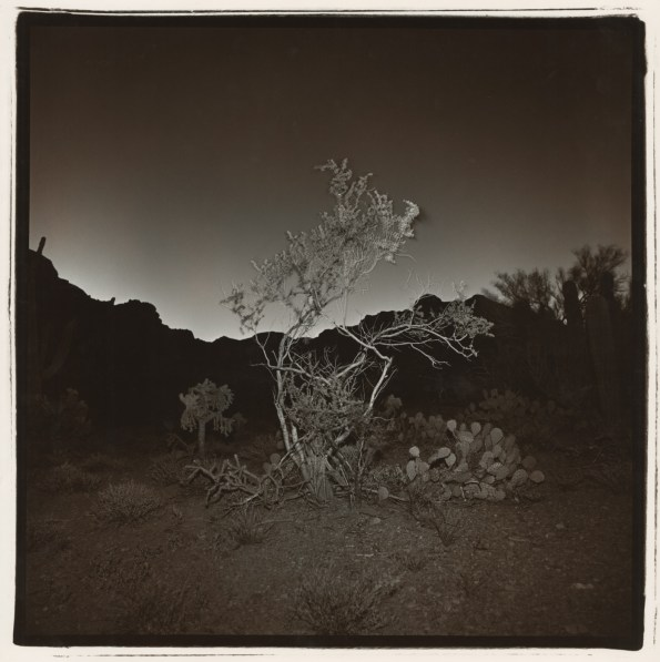 Black-and-white square photograph at night of a small scraggly tree before a silhouetted mountain background with a faintly glowing horizon