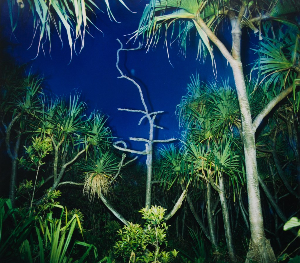 Color photograph of tropical plants and trees illuminated by a camera flash at night