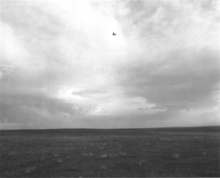A black and white photograph of an open field with a single bird in the center of a cloudy sky.