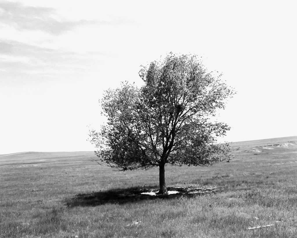 A black and white photograph of a lone tree in an open field against a brightly lit sky.