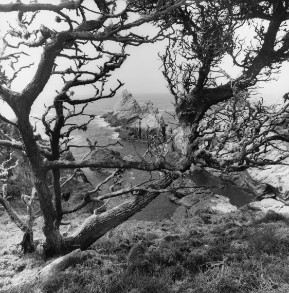 Point Lobos State Natural Reserve, California, 2012, gelatin-silver print