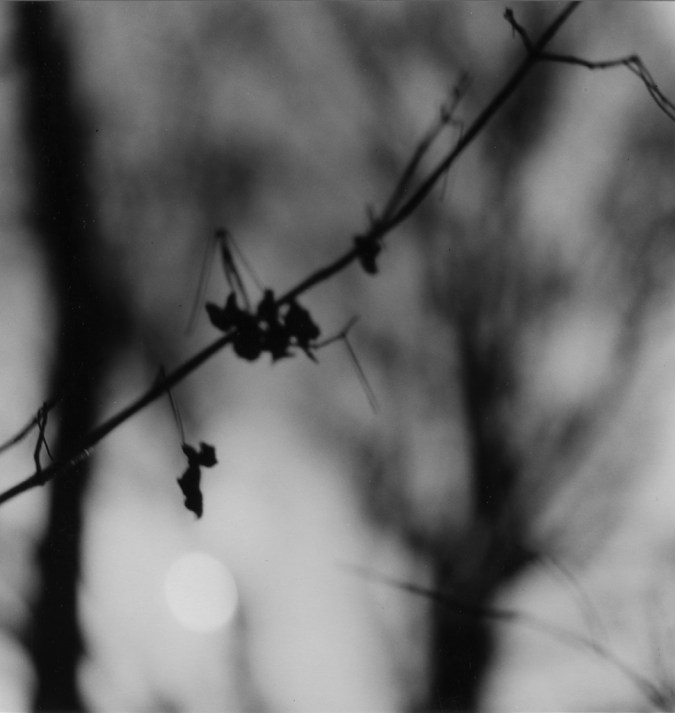 Black-and-white photograph of a thin branch against a blurred background of trees and sky