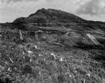 A black and white photograph of a burnt landscape with tree stumps and a hill on the horizon against a cloudy sky.