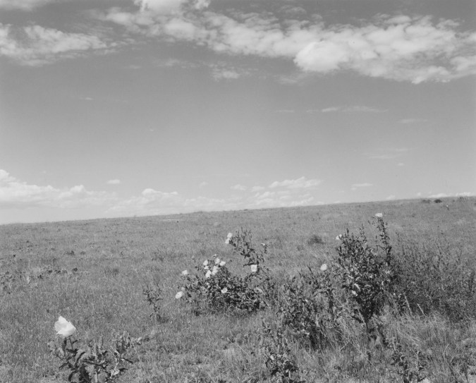 A black and white photograph with flowers in the foreground and a bright sky with scattered clouds.