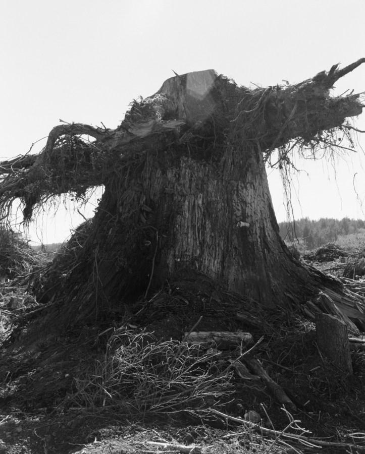 Black-and-white photograph of a large tree stump against a brightly lit sky