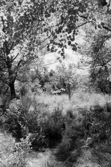 Pine Valley, 2003, gelatin-silver print